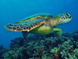 color metallic paper markers teenage mutant ninja turtles