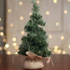 canadian pine tree in burlap trees products and decor