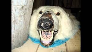 chocolate polar bear rug dada life remix super viral