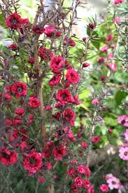best 25 little flowers ideas on pinterest petals florist