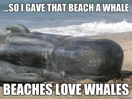 Whale Meme - so i gave that beach a whale beaches love whales beaches love