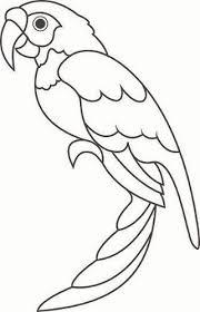 parrots coloring pages parrot printables parrot bird coloring pages books worth