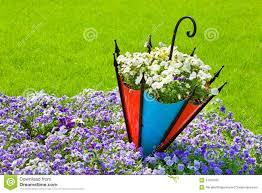 pansy flowerbed with decorative umbrella stock photos image