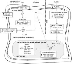 functional genomics of biotic and abiotic stresses in phaseolus