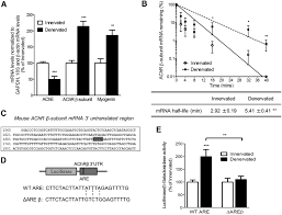 hur mediates changes in the stability of achr β subunit mrnas