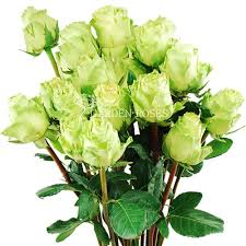 green roses classic roses