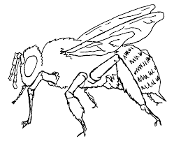 pretty inspiration ideas honey bee coloring pages 3 remarkable