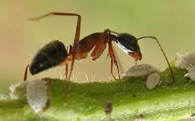Ants In Bathtub Forum Ants Nests In Pot Plants