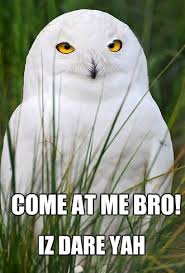 White Owl Meme - owl memes owl memes and bird