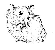 Sélection de coloriage hamster à imprimer sur LaGuerchecom  Page 2