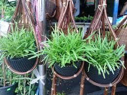 2x pot hanging planter orchid vanda basket garden flower bamboo