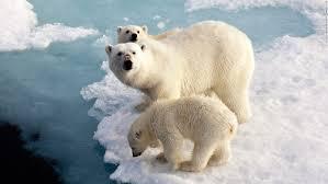ice age delayed humans 100 000 cnn