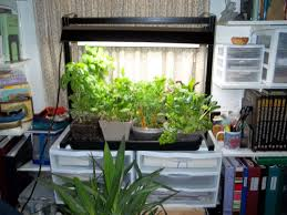garden indoors gardening ideas