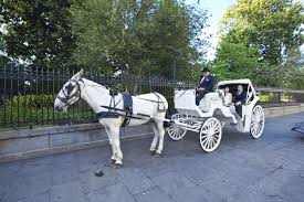 wedding planners new orleans how to incorporate carriage transportation into your new orleans