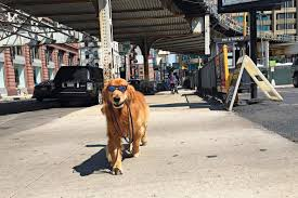 state with most dog owners 2016 the best and worst cities to be a dog