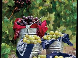 the complete guide to muscadine southern living