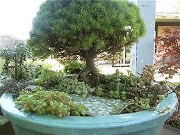 growing wood miniature gardening and bonsai bonsai fairy and