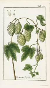 types of native plants 92 best old plant diagrams images on pinterest botany