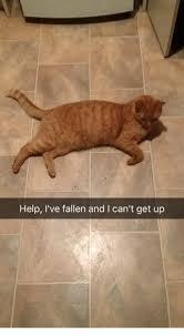 Help I Ve Fallen Meme - help i ve fallen and l can t get up ups meme on sizzle