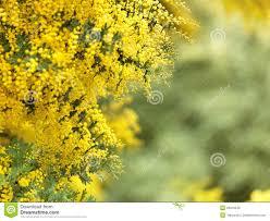 native australian flowering plants the native australian flower royalty free stock images image