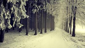 landscapes nature winter snow trees forests paths snowy wallpaper