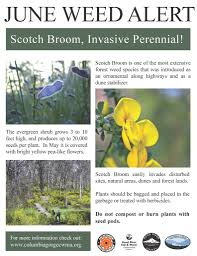 programs natural resources weeds and june u0027s weed of the month weedwise program