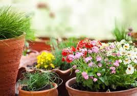 gardening tutorials