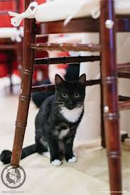 Cat Under Chair We Filled A Studio With Cats And Invited Hundreds Of People To