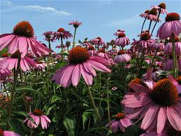 plants native to virginia native plants for clay soil welcome wildlife