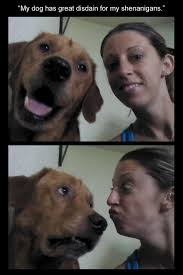 Funny Dog Face Meme - i has a hotdog funny face funny dog pictures dog memes puppy