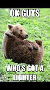 Funny Bear Meme - grizzly bear meme lol animals pinterest bear meme meme and