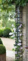 Trellis With Vines Best 25 Clematis Trellis Ideas On Pinterest Clematis Vine