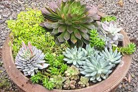 wonderful design succulent container garden stylish decoration