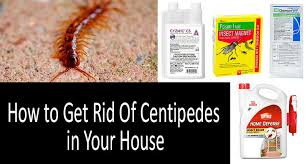Best Way To Get Rid Of Mosquitoes In Your Backyard A 5 Easy Steps Guide To Getting Rid Of House Centipedes