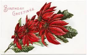 free vintage image poinsettia birthday postcard old design shop blog