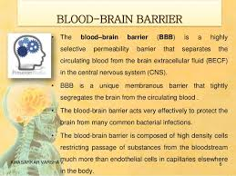 Blood Brain Barrier Anatomy Brain Targeted Drug Delivery System