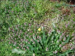 Garden Soil Types - 273 best soil mulches amendments images on pinterest garden