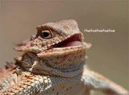 Huehuehue Meme - huehuehue lizard laughing lizard hhhehehe know your meme