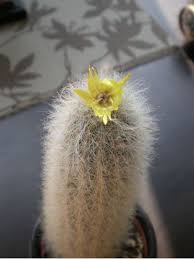 Flowers On - cactus flowers or on line guide to the positive