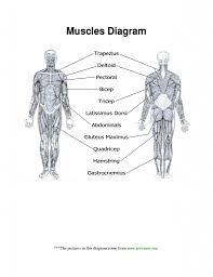 Human Anatomy Worksheet Muscle Anatomy Worksheet Tag Muscle Worksheets For Anatomy High