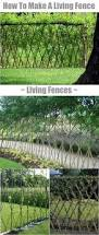how to make a living fence for your garden great gardens u0026 ideas