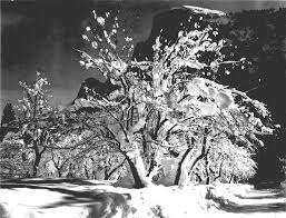 apple yosemite wallpaper photographer 226 ansel adams photographs of great american national parks are now