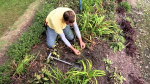 fall gardening tips the street smart gardener youtube