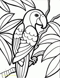 free coloring page of the rainforest rainforest coloring pages crammed for preschoolers archives