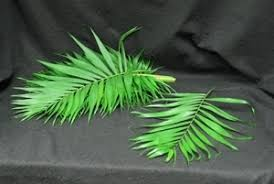palms for palm sunday purchase emerald palm leaf palm leaves palm sunday