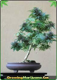 best light for weed seedlings stress