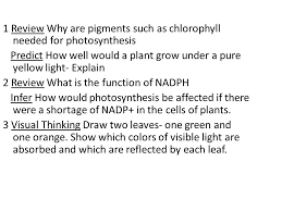 1 Review Why Are Pigments Such As Chlorophyll Needed For