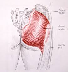 College Anatomy And Physiology Notes Notes On Anatomy And Physiology Slings At The Front Slings At