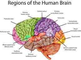 Anterior Association Area What Is The Subconscious Mind A Scientific Explanation