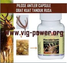 obat kuat pria alami dari tanduk rusa asli seks lebih nikmat dan